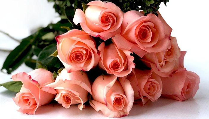 significado de las rosas rosadas