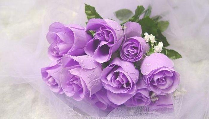 significado de las rosas purpuras