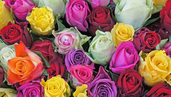 significado de las rosas